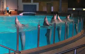 UK_Vangittuja_delfiineja