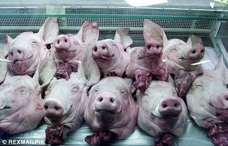 Kuvan siat eivät liity tapahtumiin.