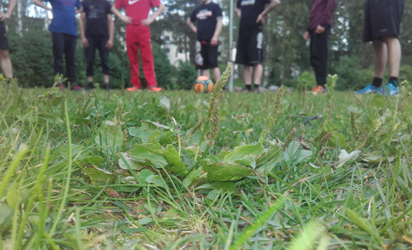jkl_jalkapallo2